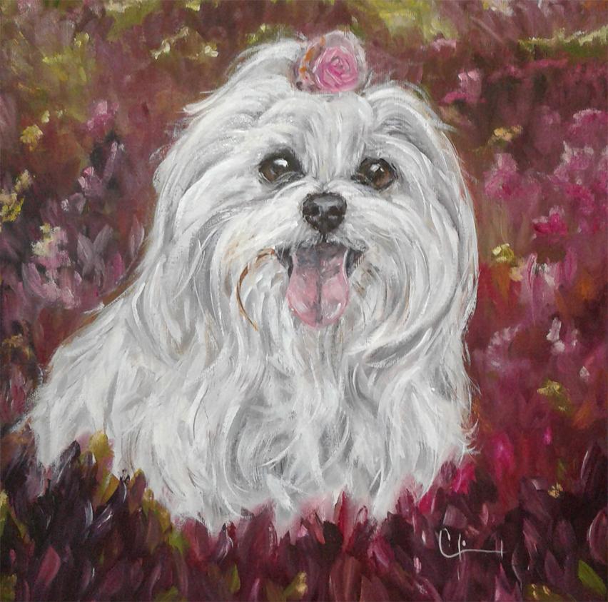 pet-art-quadro-cachorro-maltes-laco